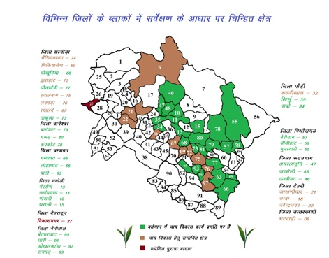 Tea development works in different blocks of uttarakhand